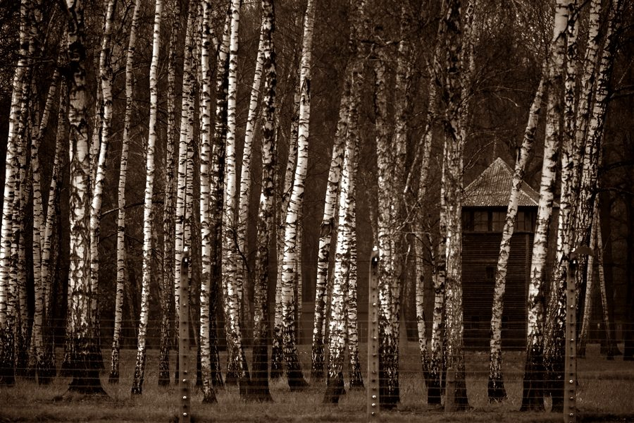 Drzewa, które widziały śmierć i… piłkę nożną